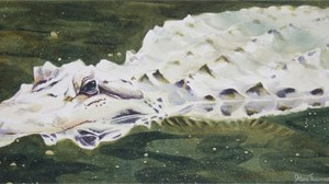 Florida_Gator-Debra_Weible-watercolor-400-300x168